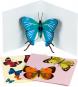 Pop-Up Grußkarten Set »Die Schmetterlinge«. Bild 1