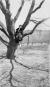 Frauen auf Bäumen. Bild 2