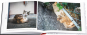 Katzen in Japan. Eine Reise durchs Land der Schmusetiger. Bild 2