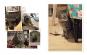 Parisian Cats. Pariser Katzen. Bild 2