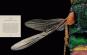 Portraits. Die Schönheit der Insekten. Microsculpture. Bild 2