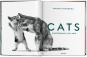Walter Chandoha. Cats. Bild 2