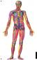 Der menschliche Körper. Eine Entdeckungsreise mit der Röntgenlupe. Bild 3
