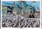 Steve McCurry. Afghanistan. Bild 3