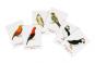 Vogelpaare. Das Memo-Spiel. Bild 3