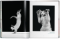 Walter Chandoha. Cats. Bild 3