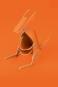 Stifthalter Känguru, orange. Bild 4