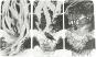 Der magische Wald. Schaurige Geschichten mit Bildkarten erzählen. Bild 5